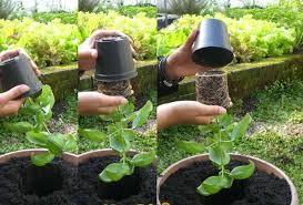 gardening tips for beginners image source gardensdecor