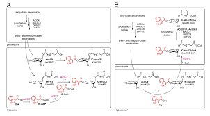 Biosynthetic Tailoring Of Existing Ascaroside Pheromones Alters