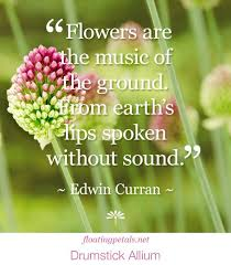 Flower Quotes Custom 48 Flower Quotes Inspiring Quotes Pinterest Quote Board And