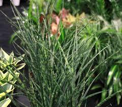 image result for best garden center