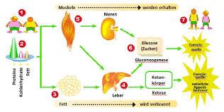 Protein diät