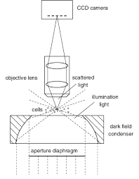 dark field microscopy fig 2 principle of dark field microscopy scientific diagram