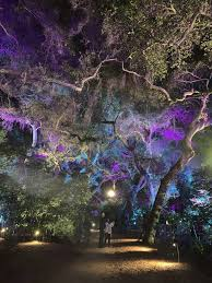 Enchanted Forest Of Lights Descanso Kid Friendly Holiday Activities In Los Angeles Laura Iz