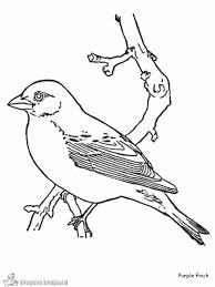 Vogels Kleurplaten Kleurplaten Voor Kids Kleurplaten Voor Kinderen