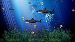 Pc - Moving Fish Wallpaper Windows 7 ...