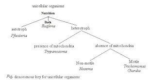 Dichotomous Flow Chart Microbiology Solved Using The Following Information Create A