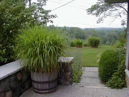 Image result for ornamental grasses in containers