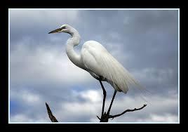 a white heron essay  a white heron essay exampleessays