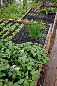 Terrace Kitchen Garden Terraced Bellevue Vegetable Garden Seattle Urban Farm Company