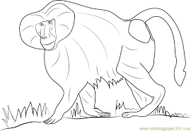 Small Picture Hamadryas Baboon Coloring Page Free Baboon Coloring Pages