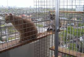 Enclosures are a good solution when cats are new to highrise living. It's  important for