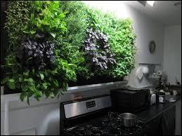 hydroponic herb garden ingenious design ideas finding the best indoor hydroponic herb garden
