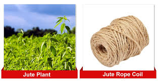 jute plant and rope