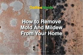 how to remove mold and mildew from your