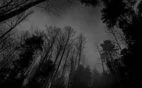 Background Images Nature Dark ...
