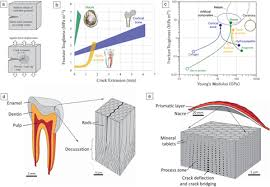 Fracture Toughness Chart The Fracture Mechanics Of Biological And Bioinspired Materials