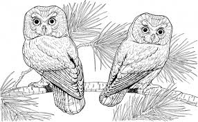 Small Picture Hard Coloring Pages Birds Animals Coloring Pages