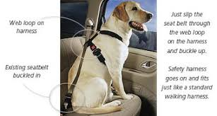 Bark Buckle Up Pet Buckle Travel Harness Gets Four Paws Up