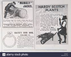 adverts for monkey jacks hardy scotch plants and coates s herd book from an old magazine during the 1914 1918 period uk gb
