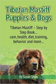 Tibetan Mastiff Puppies Dogs Tibetan Mastiff Step By