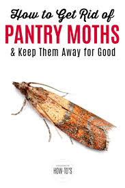 how to get rid of pantry moths for good