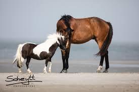 Geschenke Für Pferdeliebhaber 11 Schöne Geschenkideen