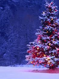 768x1024 Christmas Tree Ipad mini wallpaper