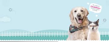 Pet Insurance For Cats Dogs From An Award Winning Provider