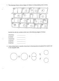 Miller And Levine Biology Worksheet Answers - Checks Worksheet