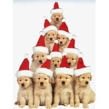 cute christmas puppies. Exellent Cute Christmas Puppy Tree Too Darn Cute Not To Pin Throughout Cute Puppies I