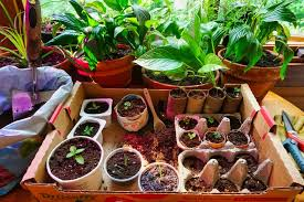 7 diy seed pots from common household