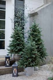 Potted Christmas trees do not always have to be small. You can even opt for  a medium sized Christmas tree and house in a bucket, pot or planter.