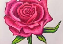 Rose Drawing In Color Flowers Color Pencil Drawing Colour Pencil