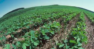 Forecasting Soybean Growth Stages With Soysim Certified