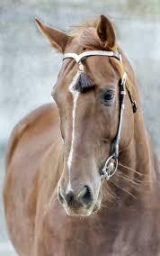 professional horse face photography. Unique Photography Horses And Professional Horse Face Photography P
