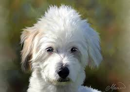 white dog portrait painting white terrier dog portrait by michael greenaway