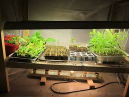 Kitchen Grow Lights Idaho Gardening Gardening In The Northwest