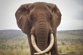 meet thula the elephant our new
