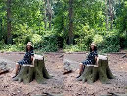 Tree Stump Seats Tree Stump Chair Seat How To Make Tree Stump Chair Chair