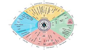 The Best Change I Ever Made In Iridology Chart Left Eye