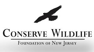 species on the edge art and essay contest conserve wildlife species on the edge art and essay contest conserve wildlife foundation of new jersey