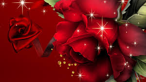 red rose wallpaper stock photos