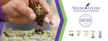 Image result for granjas de young living