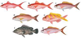 Hawaii Fishing Seasons Chart Division Of Aquatic Resources Bottom Fishing