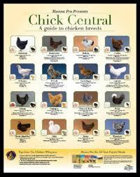 Pin On Chicks