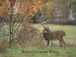 outdoor desktop backgrounds. Whitetail Deer Wallpapers Desktop #h3632505, 81.92 Kb Outdoor Backgrounds U
