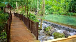 mystic mountain showing a park rainforest and a bridge