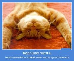 Прикольные статусы про хорошую жизнь Развлекуха ру Прикольные статусы про хорошую жизнь