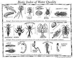 Benthic Macroinvertabrates Environmental Education Nature