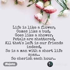 Flower Quotes In English Flower Messages Life Is English Nojo